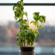 Top Science-Based Benefits of Indoor Plants