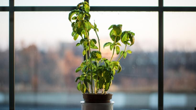 Top Science-Based Benefits of Indoor Plants