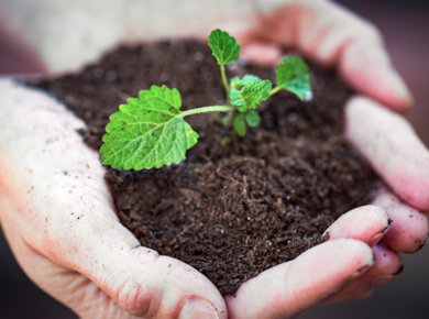 How to succeed in seeds growing business