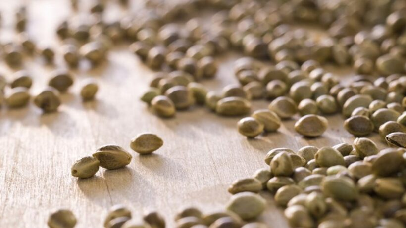 Bulk Cannabis Seeds: What are People's Thoughts?