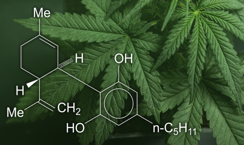 Vital Things to Know about hemp, Before You Use It