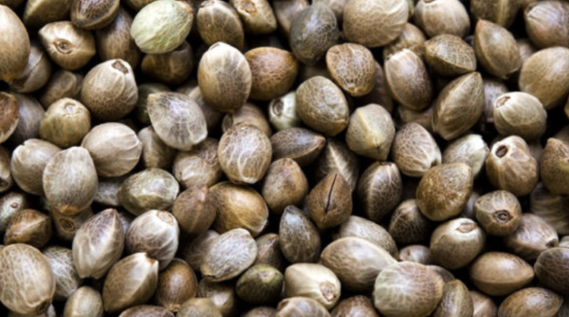 What You Should Know Before Purchasing Weed Seeds