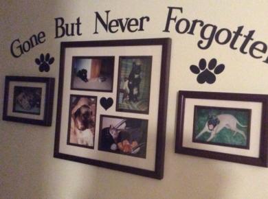 Amazing Pet Memorial Ideas