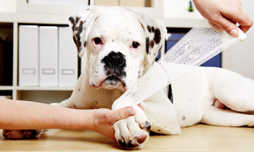 Joint Pain in Dogs - Identify the Signs; Don't Delay the Treatment